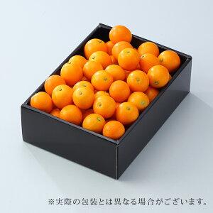 たまたま 完熟きんかん 宮崎県産 大粒 2L〜3Lサイズ  約1kg  送料無料 贈り物 ギフト 金柑 キンカン