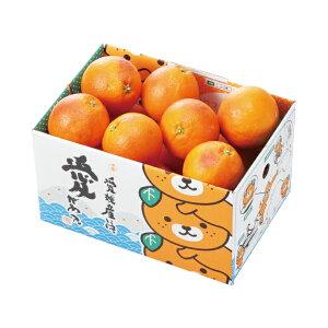 みかん タロッコオレンジ ブラッドオレンジ 風のいたずら 訳あり 大きさおまかせ みきゃん箱入り 2.5kg 愛媛県 中島産 ミカン 蜜柑