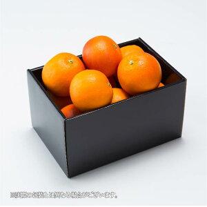 みかん ブラッドオレンジ タロッコオレンジ 青秀 3L〜Lサイズ 約1.5kg 愛媛県 中島産 送料無料 ミカン 蜜柑 ギフト 贈り物