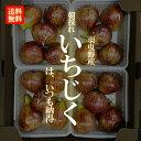 朝採れ いちじく【羽曳野産】 1ケース(約300g×4PAC入り)