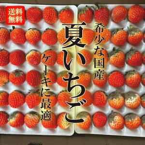 国産 夏いちご 1ケース(25〜35粒入り) ケーキ作りに 希少 イチゴ