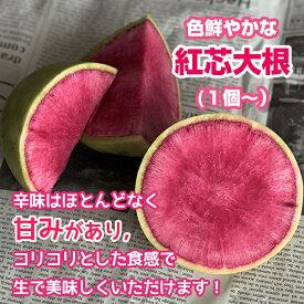 紅芯大根 【紅心大根 紅しん大根 美味しい 色鮮やか 赤い大根 お取り寄せ インスタ映え 単品 野菜 】