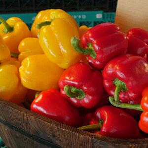 パプリカ 黄 1個から【黄色 お取り寄せ 単品野菜 美味しい おいしい】