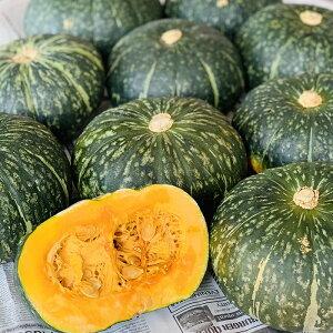 かぼちゃ 1個【南瓜 カボチャ お取り寄せ 単品 野菜 新鮮】