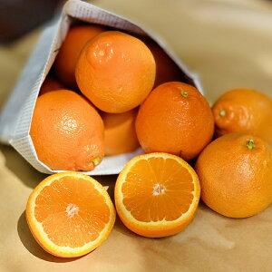 オレンジ 1個から【オレンジ お取り寄せ 単品 野菜 フルーツ 果物】