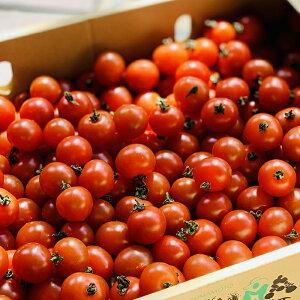 ミニトマト 1パック 200g【プチトマト お取り寄せ 単品 野菜 国内産 日本産 国産 新鮮 美味しい】