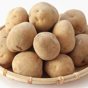 男爵芋 L〜2Lサイズ 1ケース(10kg)【国内産 日本産 じゃがいも ジャガイモ じゃが芋 箱売り 常備野菜に まとめ買い 備蓄】