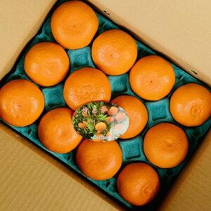せとか(2L〜3L) 1ケース【オレンジ ミカン みかん 柑橘 国産 国内産 日本産 高級 果物 ご褒美フルーツ 豪華 お土産 手土産 贈り物 プレゼント 甘い 美味しい】