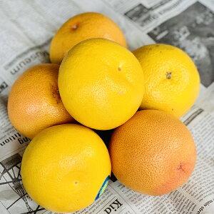 グレープフルーツ ルビー 1個【ピンクグレープフルーツ お取り寄せ お土産 手土産 贈り物 プレゼント 柑橘 フルーツ】