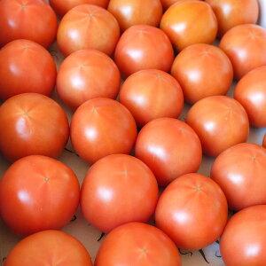トマト 1個【日本産 国内産 新鮮 お取り寄せ 単品野菜】