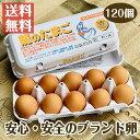 国産ブランド鶏卵 「龍のたまご」 120個 大分県産 (10個入り×12パック )【送料無料 赤玉 赤卵 濃厚 こだわり おい…