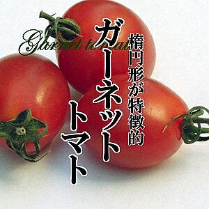 ガーネットトマト 1パック ミニトマト 甘い 糖度高い