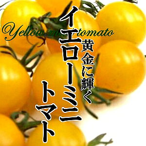 イエローミニトマト 1パック 200g 黄色 カラフル サラダ インスタ映え 彩り