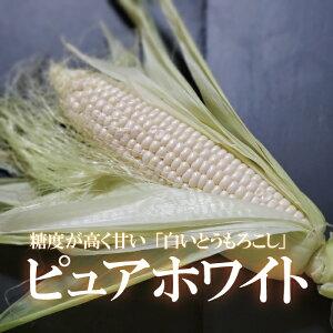 白いとうもろこし ピュアホワイト/単品/1本/糖度17度以上/驚きの甘さ/人気/国産/お取り寄せ/新鮮野菜