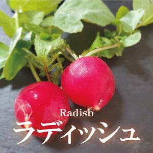 ラディッシュ 1パック【ハツカダイコン はつか大根 お取り寄せ 単品 野菜 国内産 日本産 国産 新鮮 インスタ映え おしゃれ】