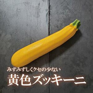 ズッキーニ/黄色 1本【イエロー お取り寄せ 単品 野菜 カラフル サラダ 新鮮 インスタ映え おしゃれ】
