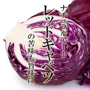 レッドキャベツ 1玉【紫キャベツ きゃべつ お取り寄せ 単品 野菜 美味しい おいしい カラフル インスタ映え】