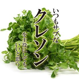 クレソン 1パック 【お取り寄せ 単品 野菜 美味しい おいしい 日本産 国内産 国産 新鮮】