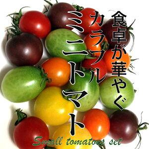 カラフルミニトマト 1パック 200g サラダ 彩り 鮮やか インスタ映え ギフト