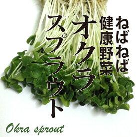 オクラスプラウト 1パック おくら 新芽 発芽野菜 ネバネバ野菜 めずらしい