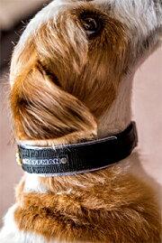 ワンタッチバックルBasic/BB肉球付ブラックベース20mm幅犬の体重=16kgまで中型犬電話番号名前名前入名入れ刺繍