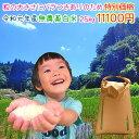 《限定1日5袋》令和元年産 新米 熊本県上益城郡産 ヒノヒカリ 無農薬 白米25kg 粒の大きさにバラつき有りのため☆特別…