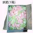 【業務用】求肥(ぎゅうひ)1箱【0126PUP10F】
