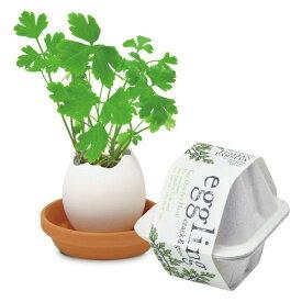 聖新陶芸 エッグリング エコフレンドリー イタリアンパセリ グリーン 栽培セット プチプラ 植物 ガーデニング ギフト 景品 プレゼント
