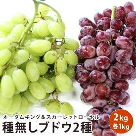 チリ産 ブドウ 2キロフルーツ ギフト ぶどう セット送料無料