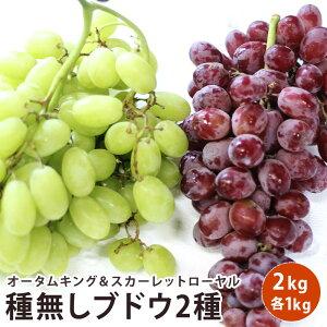 アメリカ産 ブドウ 2キロフルーツ ギフト ぶどう セット送料無料