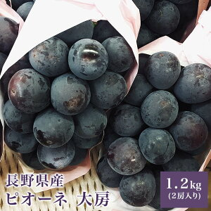 長野県産 ピオーネ 大房 2房入り 1.2キロ巨峰 種無し 大房 フルーツ ギフト プレゼント送料無料
