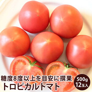 高糖度トロピカルトマト 12玉入り 500g静岡県産 フルーツトマト送料無料