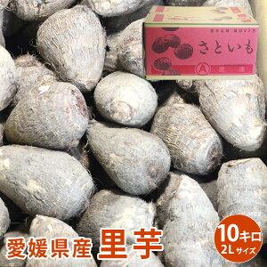 【愛媛県産】里芋 10kg 2Lサイズ さといも 芋 イモ 野菜 愛媛 国産 送料無料