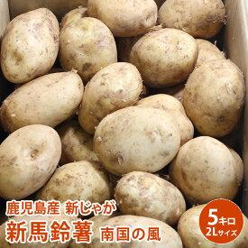 【鹿児島産】新じゃが 新馬鈴薯 南国の風 5kg 2L 約25個入 野菜 じゃがいも ジャガイモ 送料無料