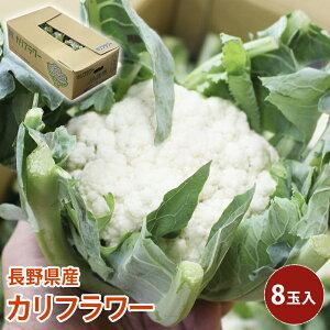 【クール便】 長野県産 カリフラワー 8玉入 花椰菜 花キャベツ cauliflower 野菜 送料無料