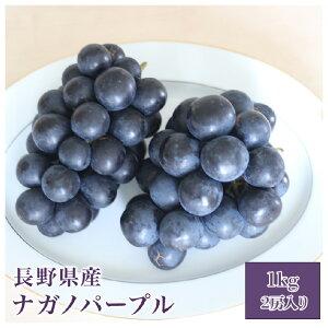 長野県産 ナガノパープル 1キロ(2房入り)巨峰 種無し フルーツ ギフト プレゼント送料無料