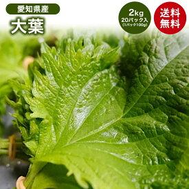 【愛知県産】大葉 1パック100g 20入り 2kg 箱売り 送料無料