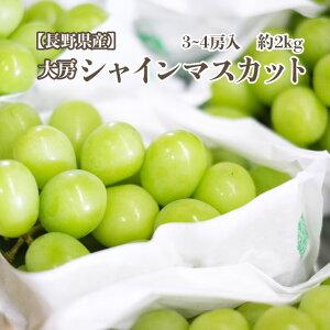 【長野県産】シャインマスカット 2キロ (3-4房入り)ぶどうシャインマスカット フルーツ ギフト プレゼント送料無料