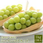 送料無料長野県産シャインマスカット大房2房入りぶどうシャインマスカットフルーツギフトプレゼント