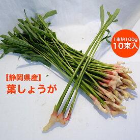 【静岡県産】葉しょうが 10束入り 約1kg 送料無料 箱売り 旬