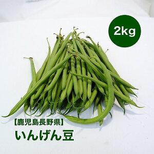 【鹿児島県産】いんげんまめ 2kg 送料無料 いんげん インゲン豆 ふじまめ 三度豆