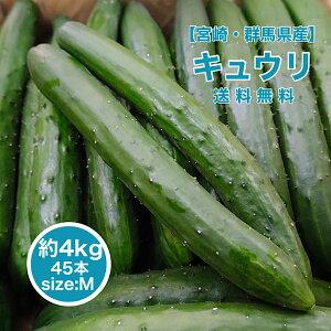 【宮崎・群馬県産】胡瓜 Mサイズ 45本入り 送料無料 箱売り