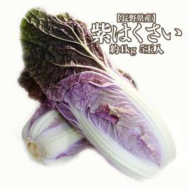 【長野県産】 紫白菜 5玉入り 約4kg 葉物 はくさい ハクサイ バイオレット 紫 鍋 送料無料 青菜 野菜 サラダ 彩 パーティー