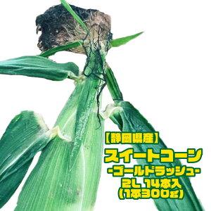 【静岡県産】スイートコーン ゴールドラッシュ 14本入り 約5kg 1本300g以上 送料無料 黄色粒 モノカラー種