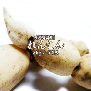 【茨城県産】れんこん 2kg 2-5入り 送料無料