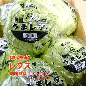 【長野県産】レタス L〜2L 15〜19個入 送料無料 野菜 サラダ うまい 萵苣 チシャ lettuce