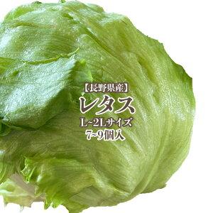 【長野県産】レタス L〜2L 7~9個入 送料無料 野菜 サラダ うまい 萵苣 チシャ lettuce