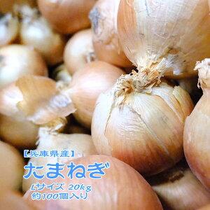 【兵庫県産】たまねぎ 20kg L 約100個入 1玉約200g 淡路島 玉葱 玉ねぎ オニオン onion カレー 業務用