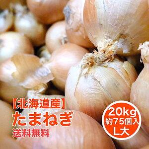 【北海道産】たまねぎ 20kg L大 約75個入 1玉約250g 北見