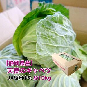 【静岡県産】天使のキャベツ 10kg JA遠州中央 甘い キャベツ
